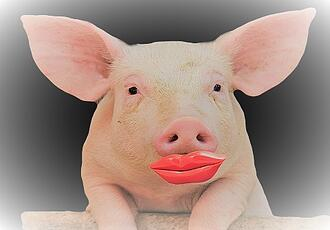 Don't just put lipstick on a pig - get a professional garage floor coating!