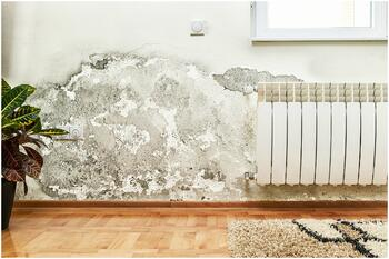 mold wall inside home